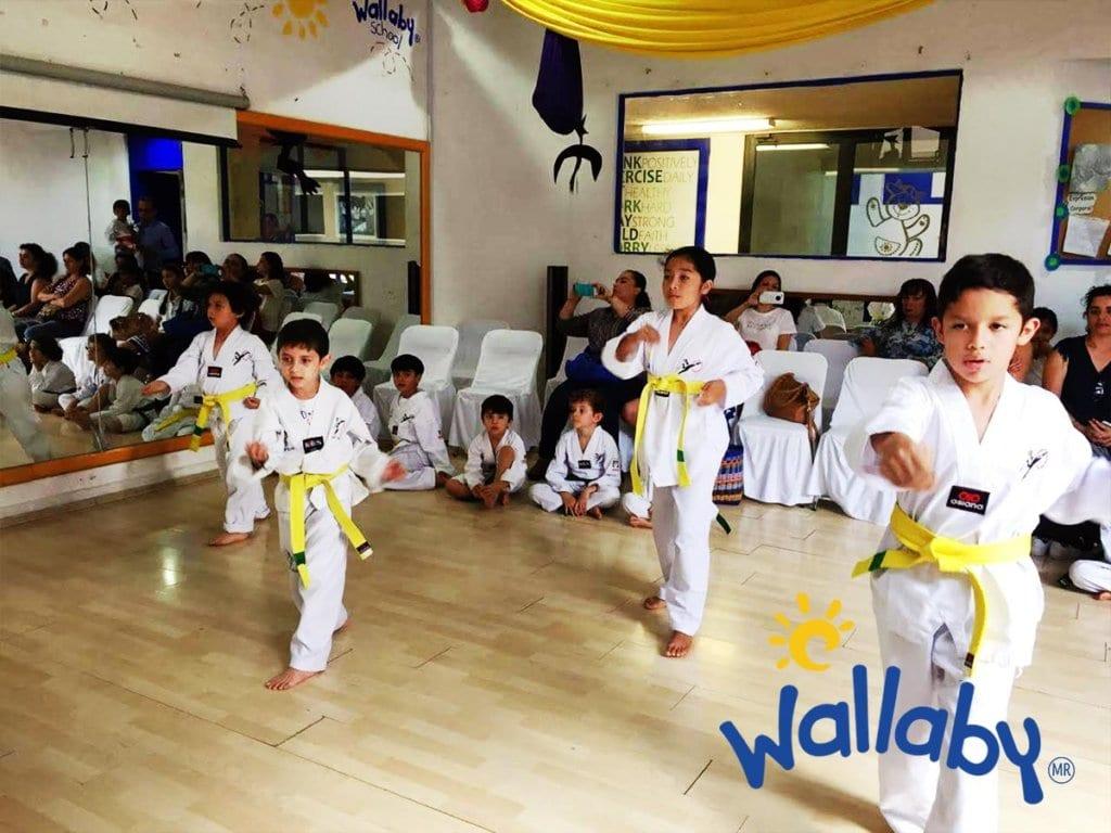 Taekwondo Wallaby